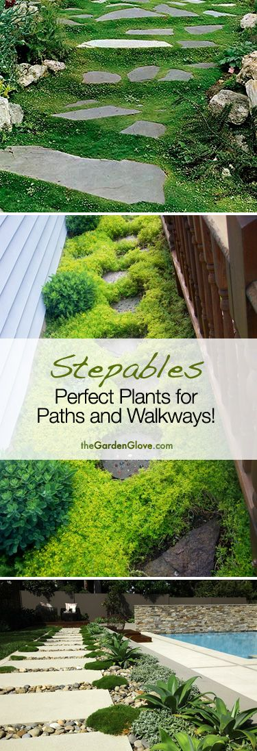 Stepables: Cool ideas for plants and ground cover for your Paths and Walkways!