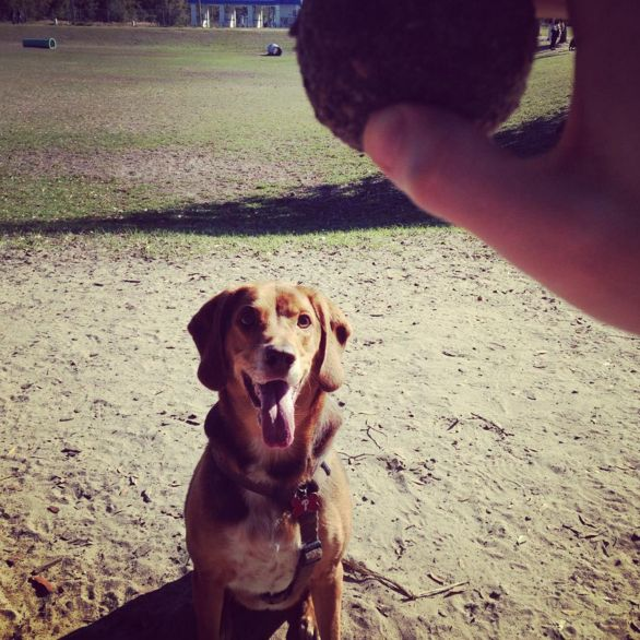 351 best florida dog parks images on pinterest dog park dog letty towles dog park ocala fl angus solutioingenieria Image collections