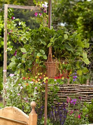 17 best images about gardening hanging baskets on - Summer hanging basket ideas ...