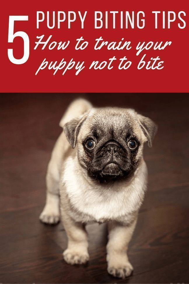 Top 5 Dog Training Tips Puppy Training Tips Puppy Biting