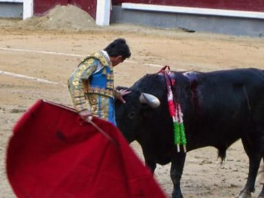 Where Can You See a Bullfight in Spain?