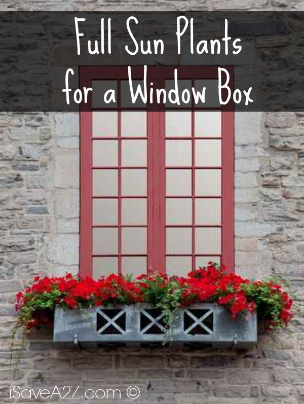 Learn about all the full sun plants that do well in a window box! Every window box should be planted according to the location where the box will be placed
