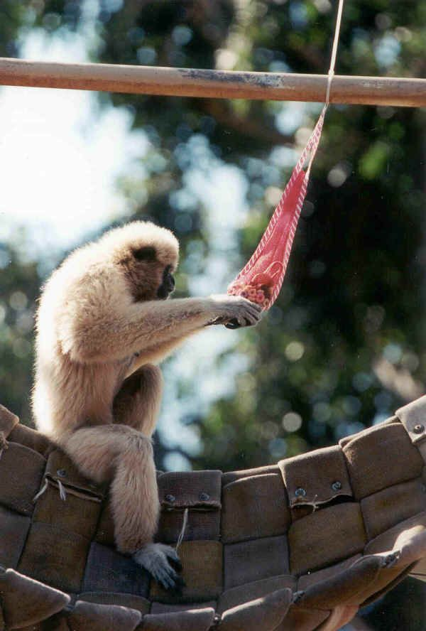 Best Primate Enrichment Images On Pinterest Zoo Animals - The 12 best zoos in the world