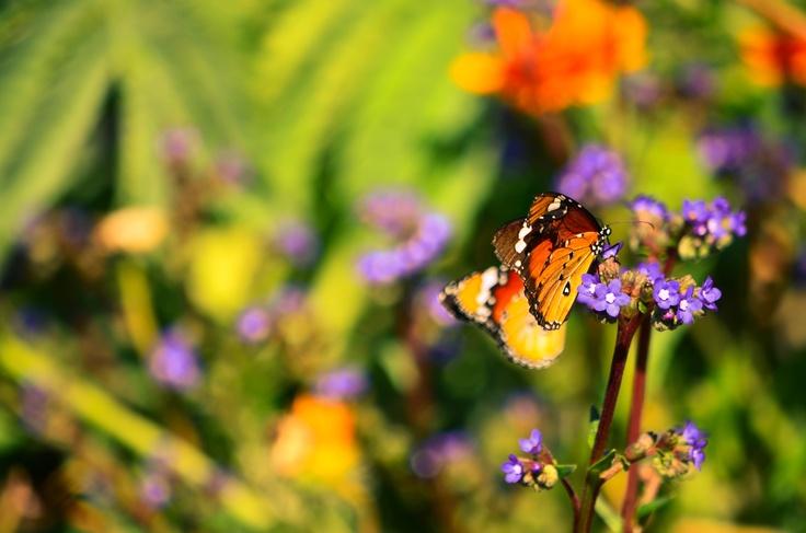 Beautiful butterflies.