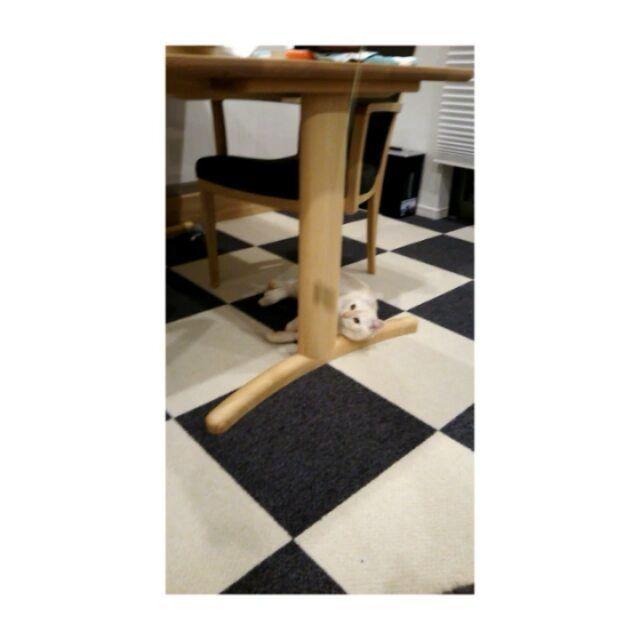 遊びたいけど動くのめんどくさー  #scottishfold#britishshorthair#catstagram#cat#cats#スコティッシュフォールド#スコ#ブリティッシュショートヘア#ブリショ#にゃんすたぐらむ#猫#ねこ#おもちゃ#遊ぶ#めんどくさい#ゴロゴロ#カリモク#いす#つくえ#テーブル#じゅうたん#東リ#table#chair#toy#play#カーペット#ペット#pet#かりもく