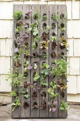 Vertical Salad Garden: Living Wall, Gardens Idea, Vertical Gardens, Pallets Garden, Plants Holders, Small Spaces, Salad Gardens, Plants Wall, Vertical Salad