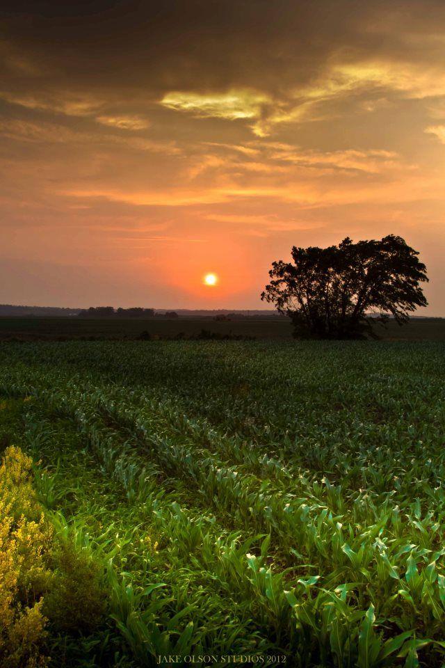 Por-do-sol em campos cultivados de Nebraska, USA.