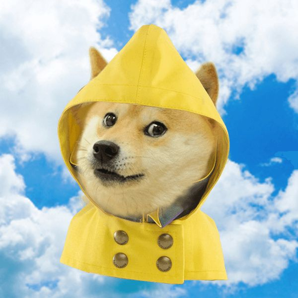 The Doge weather channel. The only weather channel you will ever need. wow. such weather.
