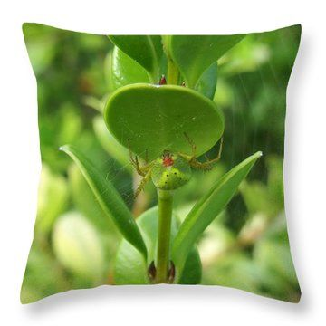 Throw Pillow featuring the photograph Spider In Italy 2 by Johanna Hurmerinta