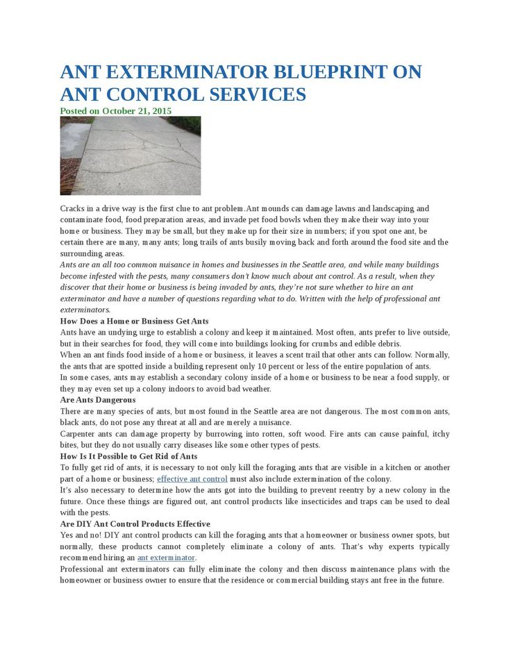Ant exterminator blueprint on ant control services
