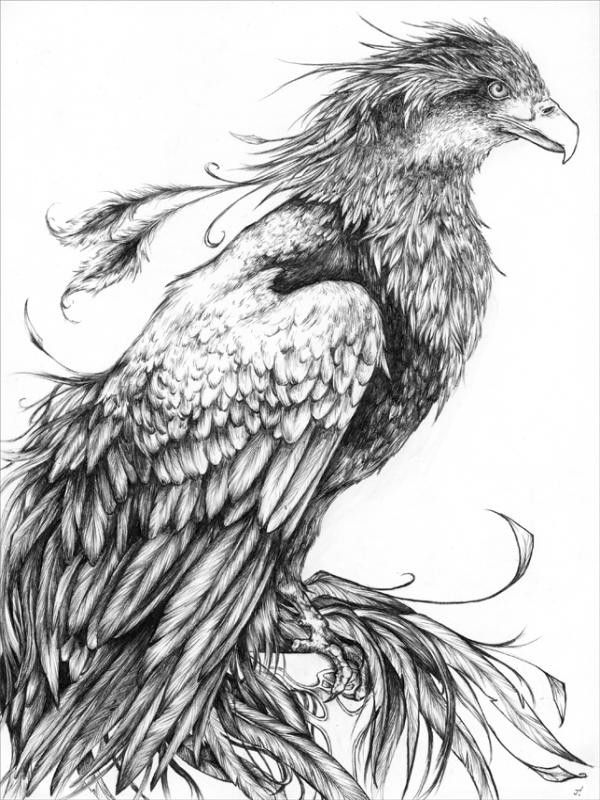 Calm Realistic Black And White Waiting Phoenix Tattoo Design Phoenix Tattoo Design Phoenix Tattoo Phoenix Drawing