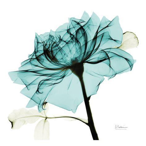 Teal Rose 2 Print by Albert Koetsier at Art.com