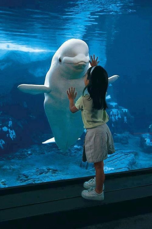 that's one cool beluga whale