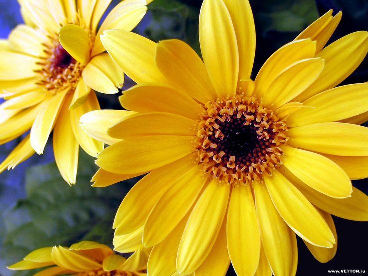 17 Best Images About Flores Amarillas On Pinterest | White ...