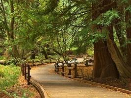 Partez à la découverte de Muir Wood et de Sausalito !