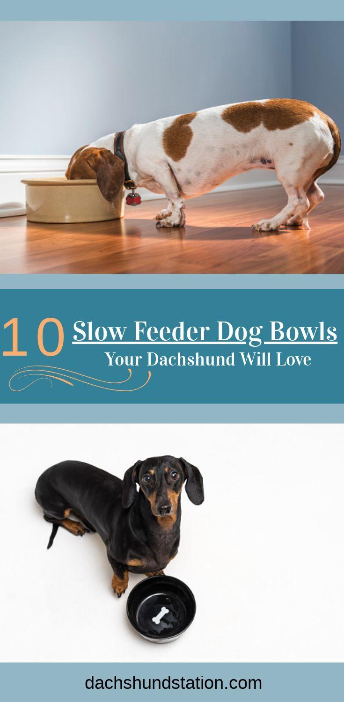 Selecting Best Slow Feeder Dog Bowls Dog Eats Too Fast Dog