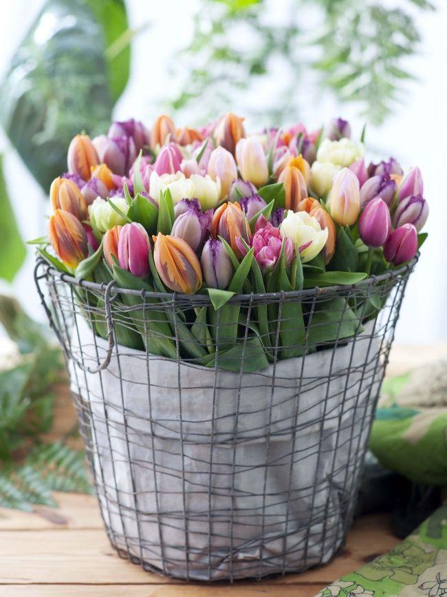 Vrolijk van de tulp | Mooi wat bloemen doen