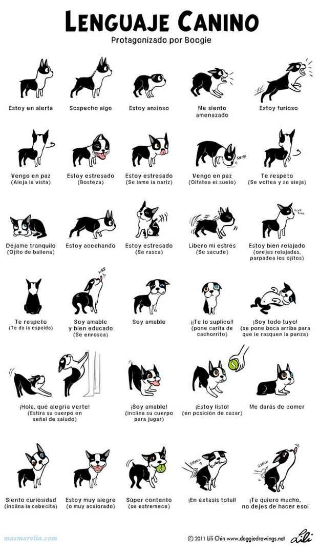 La posición de las orejas de un perrito dice mucho más de lo que crees: