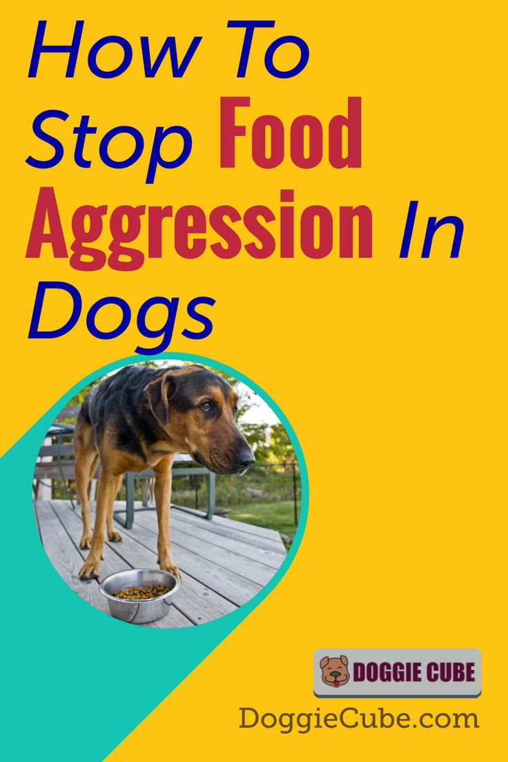 How to stop food aggression in dogs doggie cube food