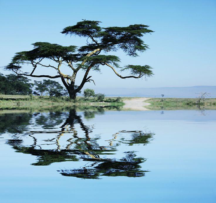 Κλασσικό αφρικανικό τοπίο