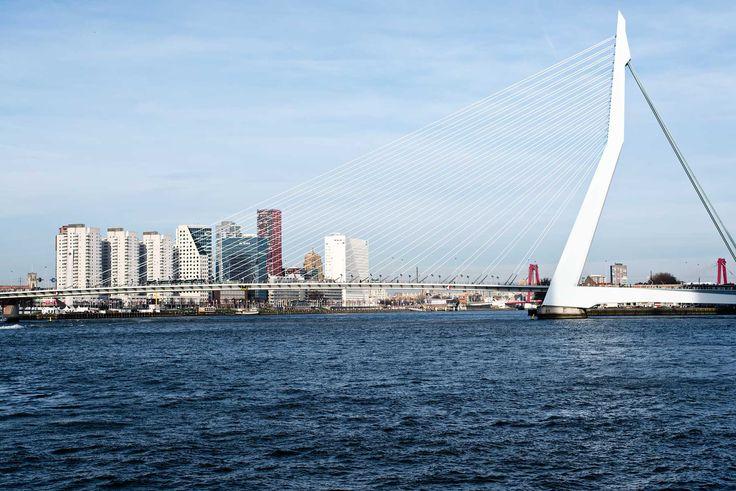 Things to do and see in Rotterdam: Erasmusbrug / Erasmus Bridge