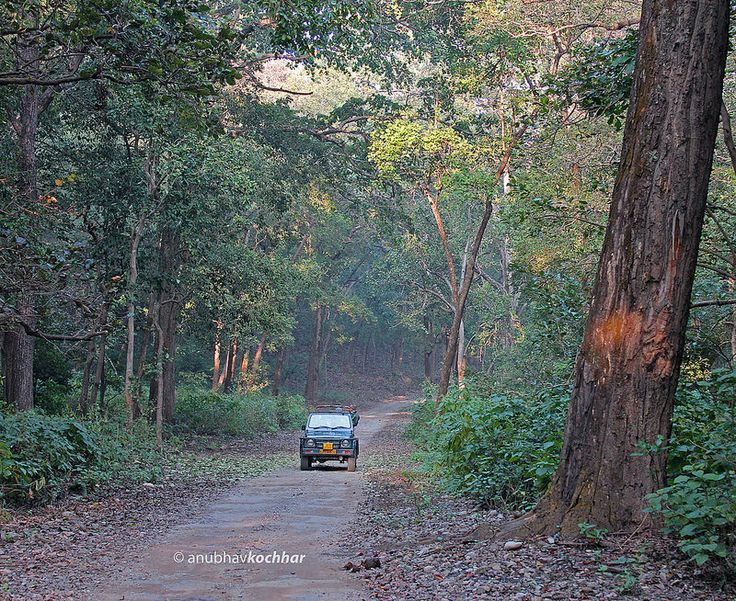 If you haven't seen Dhikala; you've missed everything! Dhikala is a forest lodge that is run and managed by Forest Department, Jim Corbett National Park, Uttarakhand.
