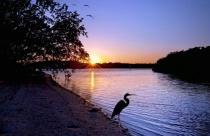 Early Birds: Early Bird