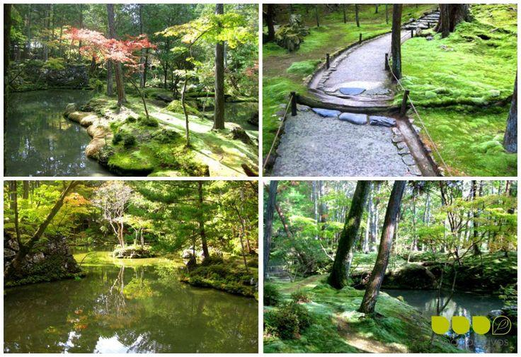 Jardin de musgo en jap n plantas jardin japones pinterest for Plantas jardin japones