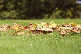 Листья, Трава, Осенние Листья