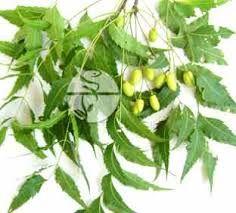 Resultado de imagen para neem planta medicinal para que sirve