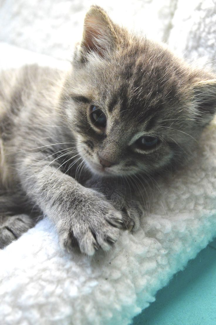 How to Treat an Eye Infection in a Kitten Pet Tips & DIY