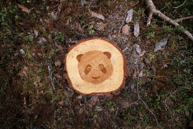 Deforestation Faces by Stevo Dirnberger | How Far From Home #HFFH_creates