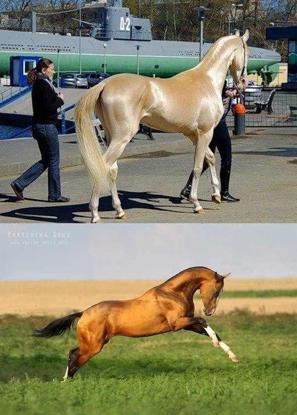 View All Images At أجمل خيول العالم صور Folder Horses Most Beautiful Horses Beautiful Horses
