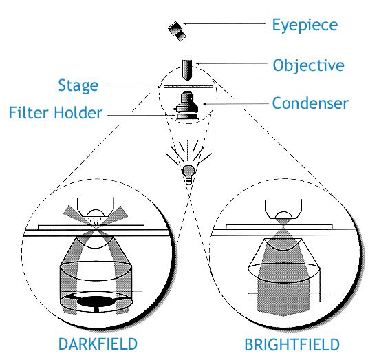 16 best parts of the microscope images on pinterest contrast darkfield microscopy explained including darkfield and brightfield microscopes ccuart