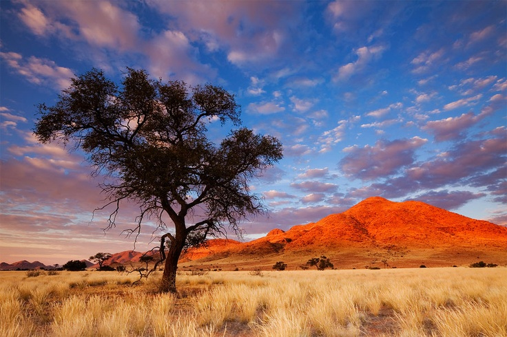 landscape photograph of an acacia camelthorn tree with the nubib mountains of namibia in the background at sunrise