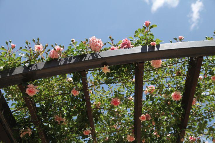 166 best images about on pinterest gardens picket. Black Bedroom Furniture Sets. Home Design Ideas