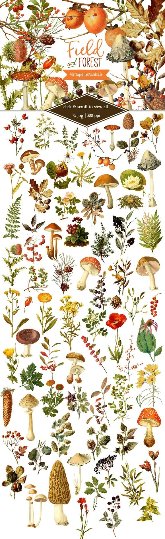 Field & Forest Vintage Botanicals by Eclectic Anthology on @creativemarket