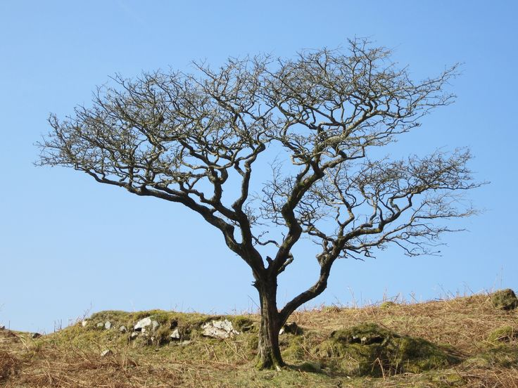 Isolated thorn tree on the southern flank of the mountain