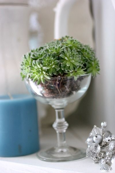 How can something this simple, make me so happy. Succulent love for brown thumbs!! Head on over and see these beautiful ideas for those who can't keep greens alive. Love this!