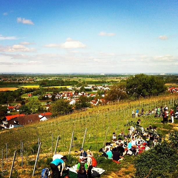 #Weinwanderung #Bensheim #Germany #wine #meeting #festival #gourmet #panorama #drinking