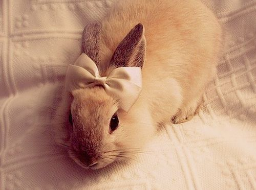 @Jodi Wissing Laurila You should get a bow for Annabelle! Although, @liz z Plattenberg might steal her then.