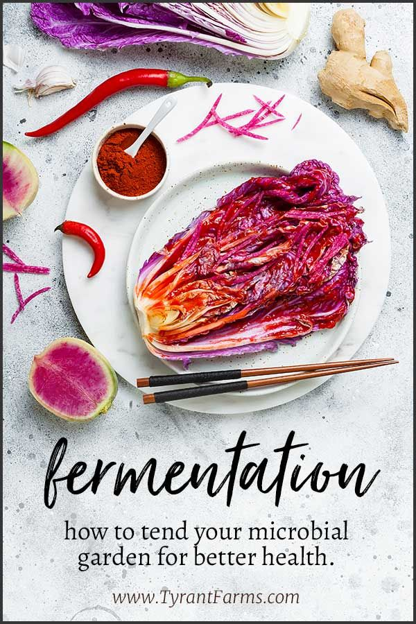 Fermentation How To Tend Your Microbial Garden For Better Health Microbiome Guthealth Probiotics Raw Food Recipes Fermentation Recipes Health And Wellness