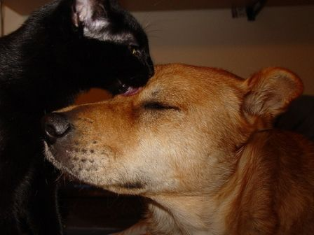 I am a huge animal lover and have an exact look alike cat and dog