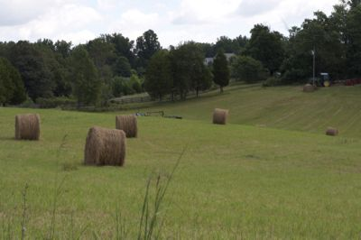 Legume hay vs.… http://www.proequinegrooms.com/index.php/tips/health-and-well-being/legume-hay-versus-grass-hay-important-stuff-to-know/