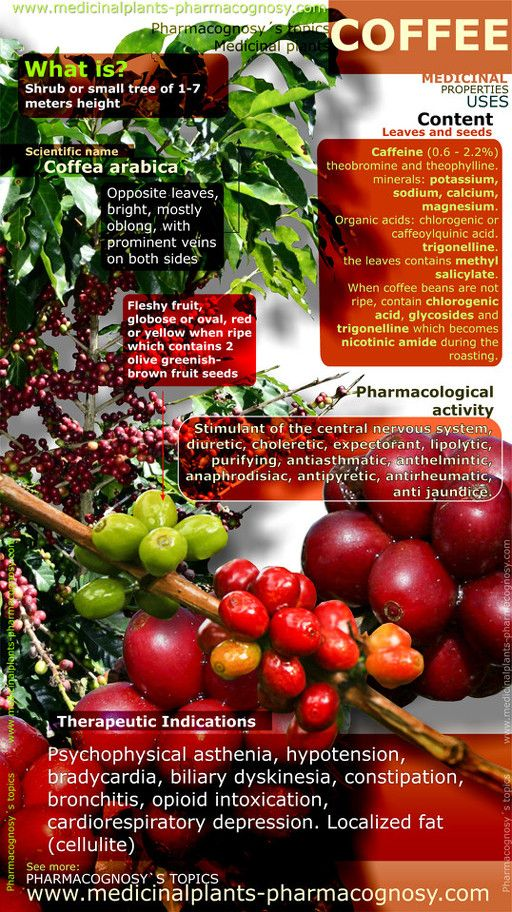 Infographic. Summary of the general characteristics of the Coffee plant. Medicinal properties, benefits and uses more common of Coffee fruit, leaves and seeds. http://www.medicinalplants-pharmacognosy.com/herbs-medicinal-plants/coffee-benefits/infographic/