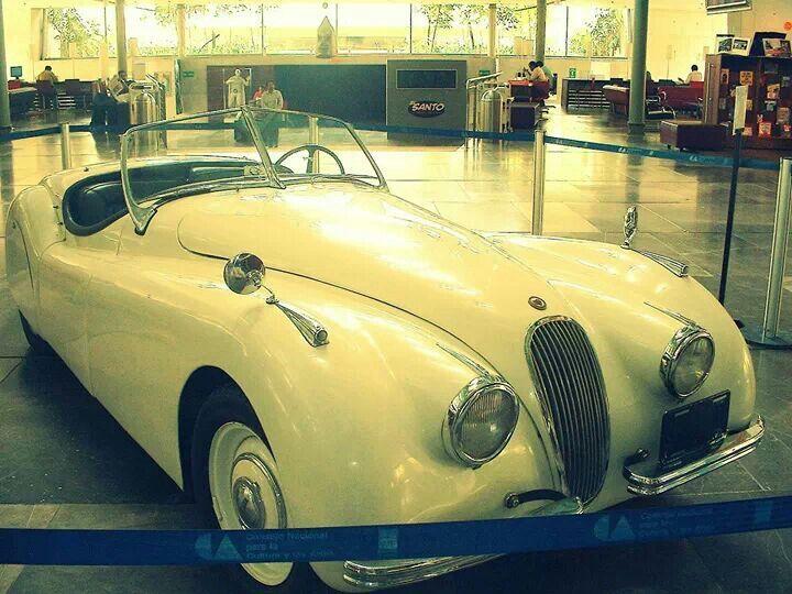 Jaguar santo