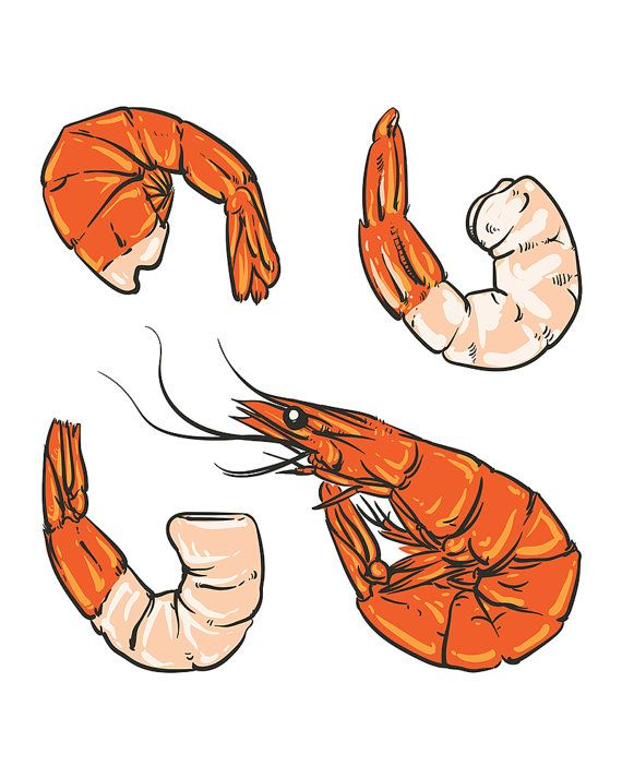 80% Off Sale Seafood cocktail drawing. Shrimp for a party or dinner. Hand drawn seafood illustration. Prawn. (EPS, VECTOR, JPG)