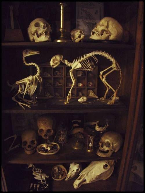 Cabinet of curiosities - skeletons.