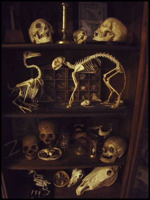 Cabinet of curiosities - skeletons.