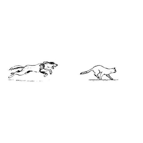 собака бежит - Поиск в Google